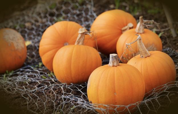 https://www.pexels.com/photo/food-pasture-pumpkin-squash-209515/